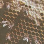 Будет вкусный мёд!