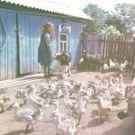 Чабан Ф.М. Салихьянова на личном подворье